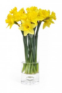 10339-yellow-daffodils-in-a-vase-isolated-on-a-white-background-pv