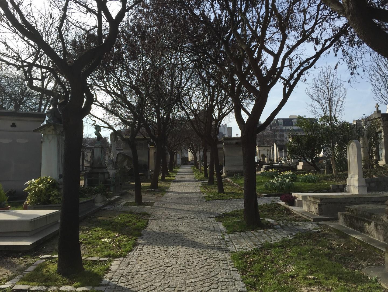 Allée de cimetière avec arbres