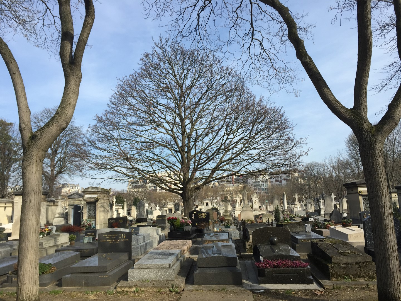 Arbre unique dans cimetière